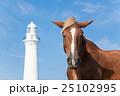下北半島 尻屋崎 仔馬の寝顔 25102995
