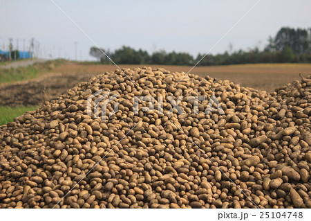 ジャガイモ収穫 25104748