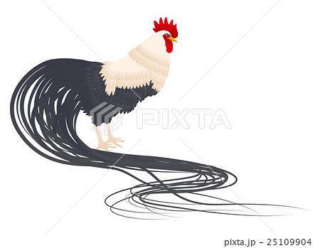 尾長鶏のイラスト素材 25109904 Pixta