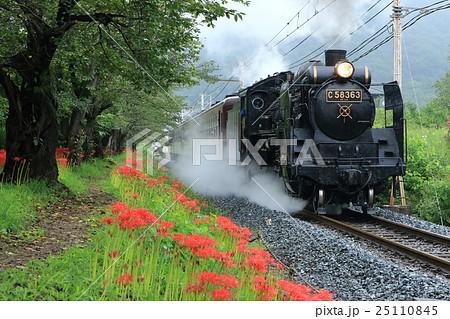 雨の日の彼岸花と「SLパレオエクスプレス号」 25110845
