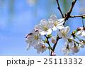 大島桜 桜 バラ科の写真 25113332