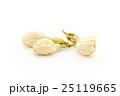 ジャスミンの花:Jasmine Flower 25119665