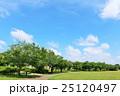 青空 初夏 並木道の写真 25120497