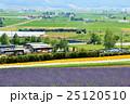北海道 ラベンダー畑 風景の写真 25120510
