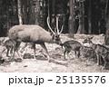 Deer in the zoo 25135576