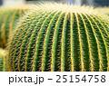 サボテン 植物 棘の写真 25154758