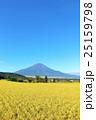爽やかな秋の青空と田んぼ そして富士山 25159798