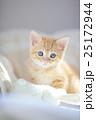 茶トラ子猫2 25172944