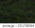 蛍 光 昆虫の写真 25178094