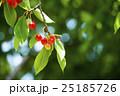 木になるサクランボ 25185726