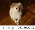 犬と日向ぼっこ 25193513