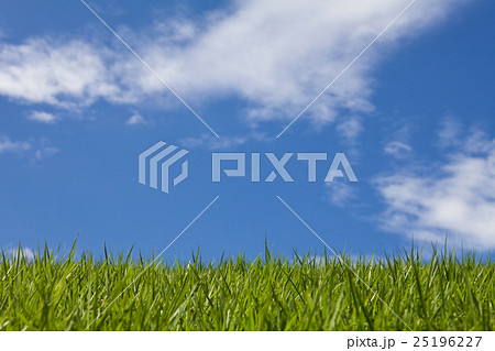 Horizon line, green grass field and blue sky 25196227