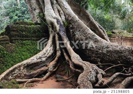 根を張る木 25198805