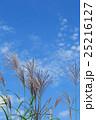 ススキの穂 25216127
