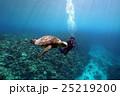 アオウミガメ 海中 亀の写真 25219200