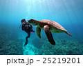 アオウミガメ 海中 亀の写真 25219201