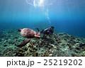 アオウミガメ 海中 亀の写真 25219202