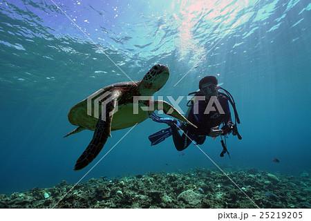 ウミガメとダイバー 25219205