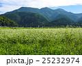 蕎麦畑と杉坂峠 25232974