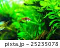 aquarium 25235078