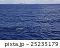 アオウミガメの息継ぎ 25235179
