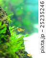 aquarium 25235246