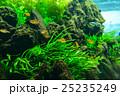 aquarium 25235249