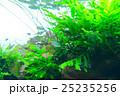 aquarium 25235256