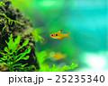 aquarium 25235340