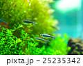 aquarium 25235342