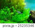 aquarium 25235346