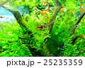 aquarium 25235359