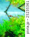 aquarium 25235361