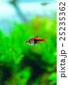 aquarium 25235362