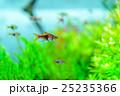 aquarium 25235366