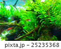 aquarium 25235368