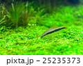 aquarium 25235373