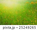 ルドベキア オオハンゴンソウ属 花の写真 25249265