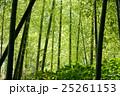 竹林 25261153