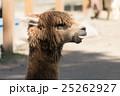 山古志のアルパカ 25262927