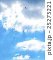 パラグライダー 大観峰 25273221
