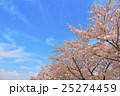 桜吹雪 桜 花びらの写真 25274459