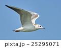 鳥 飛翔 海の写真 25295071