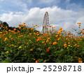 ひたち海浜公園のキバナコスモス畑から見た大観覧車 25298718