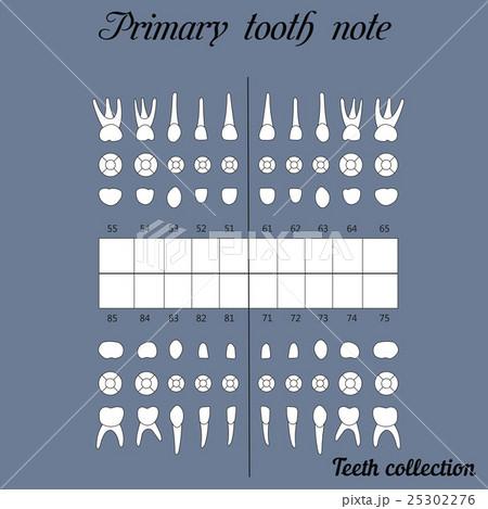 primary teeth noteのイラスト素材 [25302276] - PIXTA