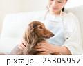 犬 女性 ペットの写真 25305957