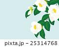 白椿 25314768