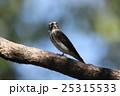 エゾビタキ 25315533