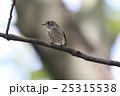 エゾビタキ 25315538