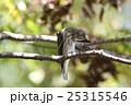 エゾビタキ 25315546